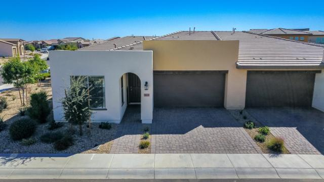 923 E Cereus Pass, San Tan Valley, AZ 85140 (MLS #5845860) :: Team Wilson Real Estate