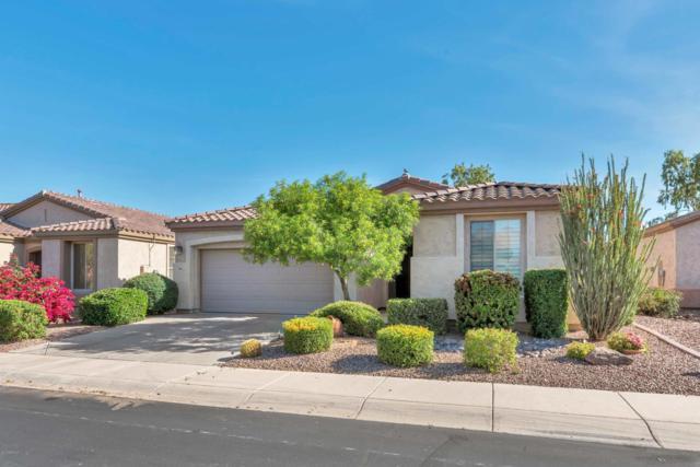 4080 E Lodgepole Drive, Gilbert, AZ 85298 (MLS #5847197) :: The Jesse Herfel Real Estate Group