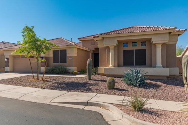 9616 S 26TH Lane, Phoenix, AZ 85041 (MLS #5847532) :: The Jesse Herfel Real Estate Group