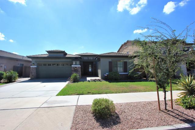 18677 E Cattle Drive, Queen Creek, AZ 85142 (MLS #5847670) :: Arizona 1 Real Estate Team