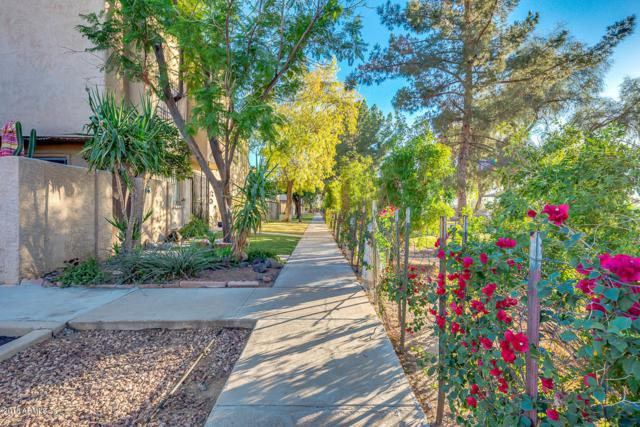 4160 N 81ST Street, Scottsdale, AZ 85251 (MLS #5848839) :: Arizona 1 Real Estate Team