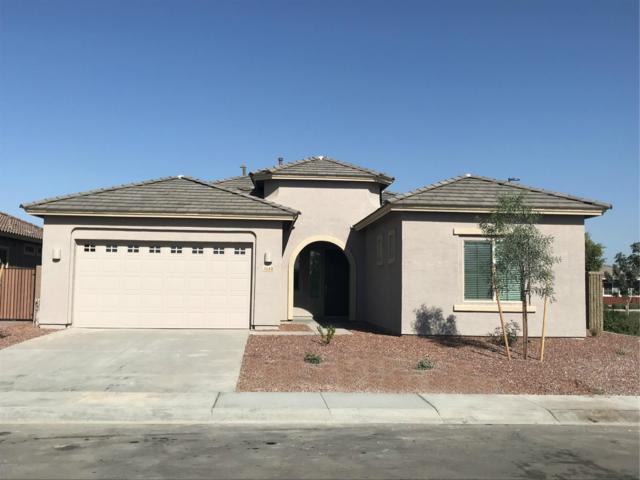 3140 E Desert Broom Place, Chandler, AZ 85286 (MLS #5849638) :: Revelation Real Estate