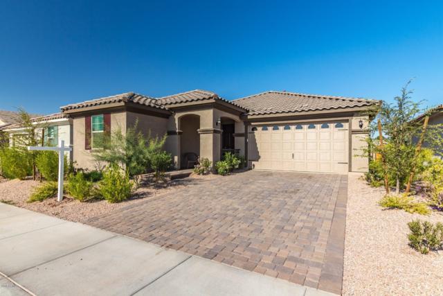3836 E Liberty Lane, Gilbert, AZ 85296 (MLS #5849894) :: Conway Real Estate