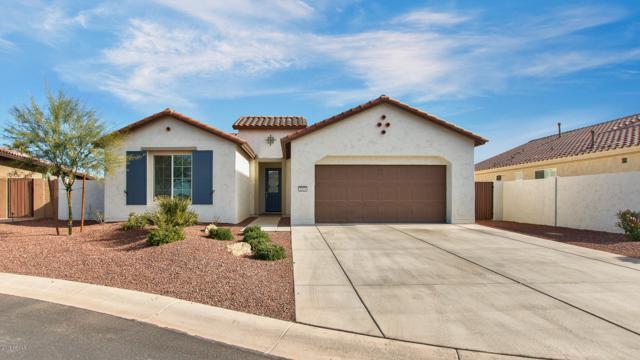 2523 N 166TH Drive, Goodyear, AZ 85395 (MLS #5857032) :: Desert Home Premier