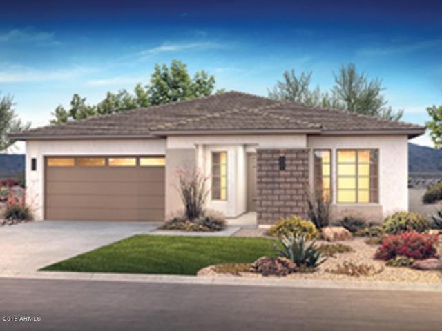 13120 W Domino Drive, Peoria, AZ 85383 (MLS #5857995) :: Desert Home Premier