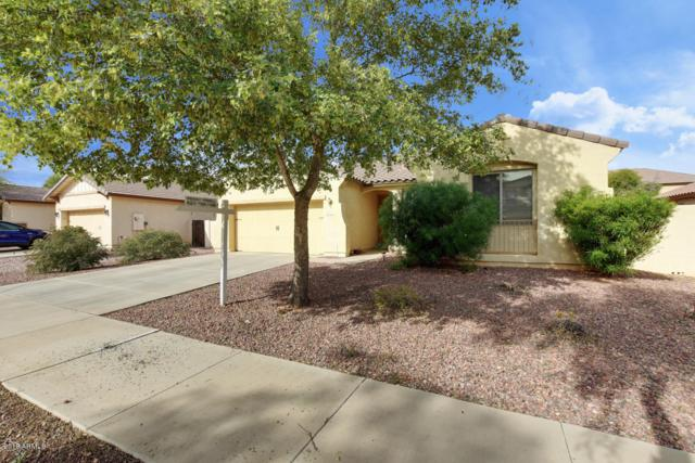 14110 W Windrose Drive, Surprise, AZ 85379 (MLS #5858133) :: CANAM Realty Group
