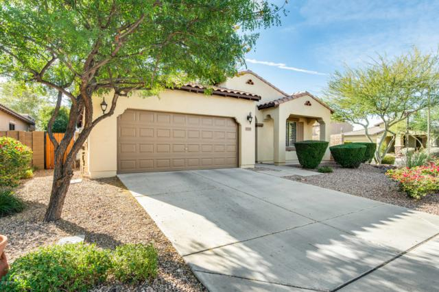 13251 W Creosote Drive, Peoria, AZ 85383 (MLS #5858637) :: Keller Williams Legacy One Realty