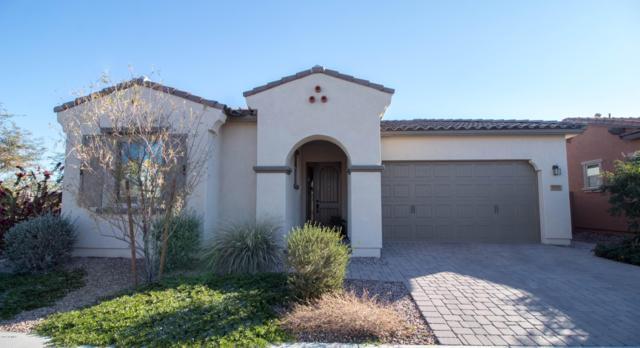 3901 S Scott Drive, Chandler, AZ 85286 (MLS #5862927) :: RE/MAX Excalibur