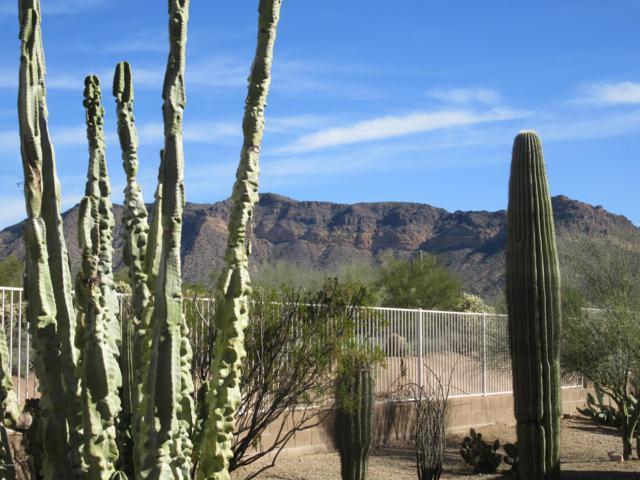 2738 N Cabot Circle, Mesa, AZ 85207 (MLS #5871428) :: Yost Realty Group at RE/MAX Casa Grande