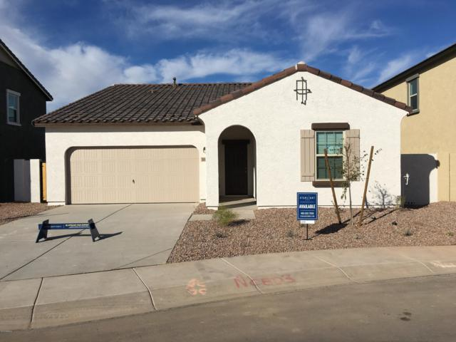 36960 W Capri Avenue, Maricopa, AZ 85138 (MLS #5876089) :: The Laughton Team