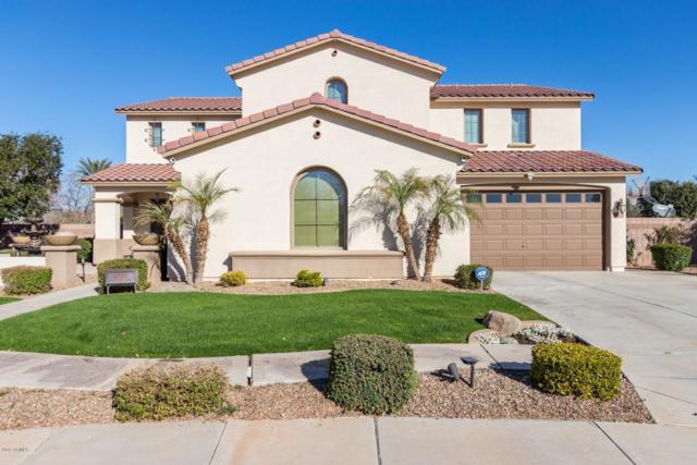 4720 S Platinum Court, Chandler, AZ 85248 (MLS #5882763) :: Relevate   Phoenix