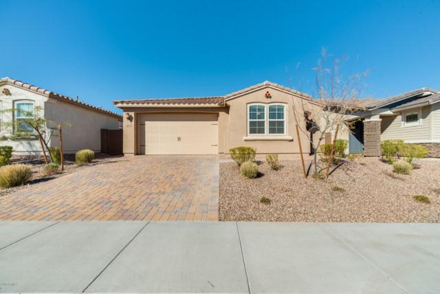 13716 W Amberwing Street, Peoria, AZ 85383 (MLS #5884741) :: The Laughton Team