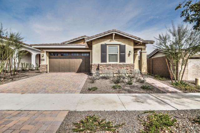 20684 W Meadowbrook Avenue, Buckeye, AZ 85396 (MLS #5885250) :: Yost Realty Group at RE/MAX Casa Grande