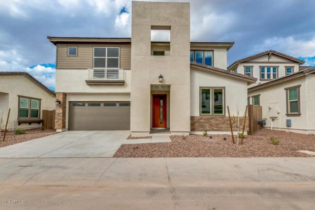 256 E Dogwood Drive, Chandler, AZ 85286 (MLS #5886020) :: Occasio Realty