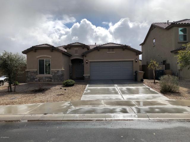 17689 W Hadley Street, Goodyear, AZ 85338 (MLS #5886938) :: Occasio Realty