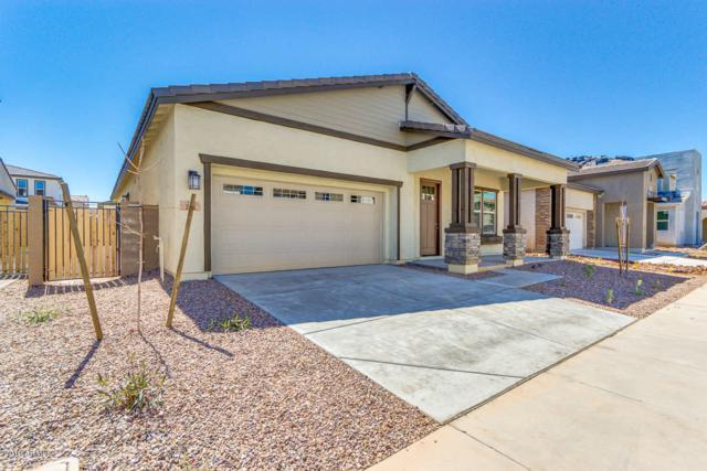 245 E Honeysuckle Place, Chandler, AZ 85286 (MLS #5897338) :: Yost Realty Group at RE/MAX Casa Grande