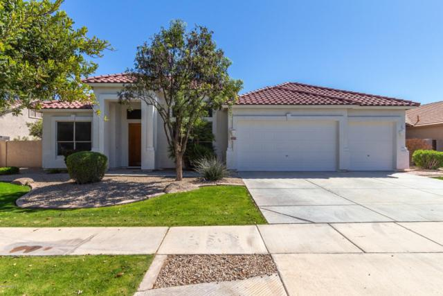 4723 S Oleander Drive, Chandler, AZ 85248 (MLS #5898253) :: The Everest Team at My Home Group