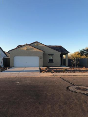 37114 W Capri Avenue, Maricopa, AZ 85138 (MLS #5901979) :: Team Wilson Real Estate