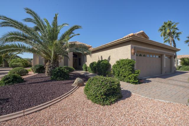 14977 W Whitton Avenue, Goodyear, AZ 85395 (MLS #5902426) :: Arizona 1 Real Estate Team