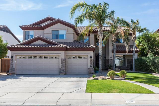 2955 E Cathy Drive, Gilbert, AZ 85296 (MLS #5906428) :: Yost Realty Group at RE/MAX Casa Grande