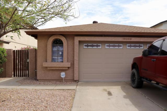 18239 N 37TH Drive, Glendale, AZ 85308 (MLS #5906573) :: Yost Realty Group at RE/MAX Casa Grande
