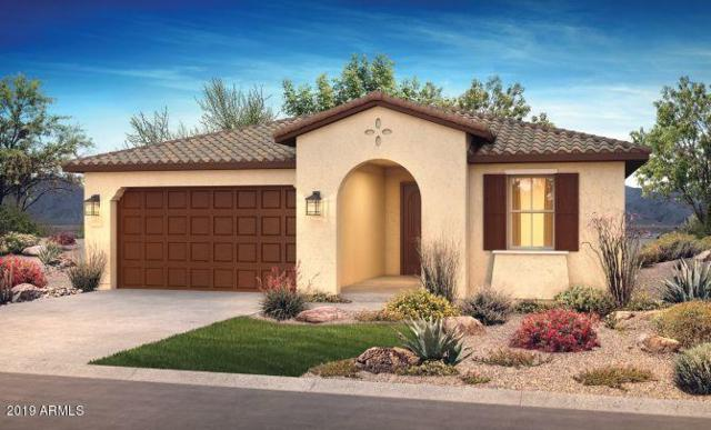 13372 W Blackstone Lane, Peoria, AZ 85383 (MLS #5907780) :: Yost Realty Group at RE/MAX Casa Grande