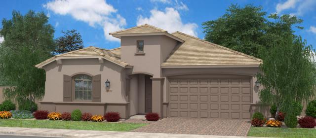 1177 W Snowbell Avenue, Queen Creek, AZ 85140 (MLS #5909160) :: Revelation Real Estate