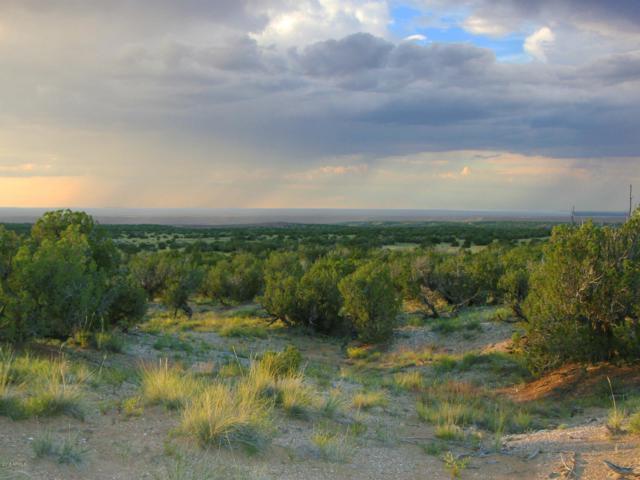 2429 Bourdon Ranch Road, Taylor, AZ 85939 (MLS #5909484) :: neXGen Real Estate