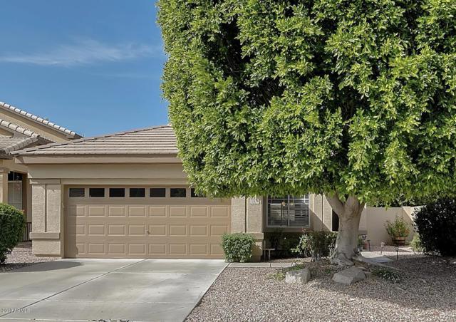 7004 W Blackhawk Drive, Glendale, AZ 85308 (MLS #5909614) :: Yost Realty Group at RE/MAX Casa Grande