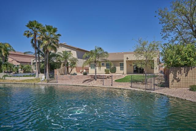 659 E La Costa Drive, Chandler, AZ 85249 (MLS #5909875) :: Riddle Realty