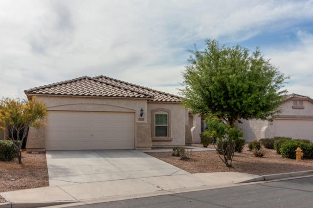 18442 N Ibis Way, Maricopa, AZ 85138 (MLS #5911304) :: The Everest Team at My Home Group