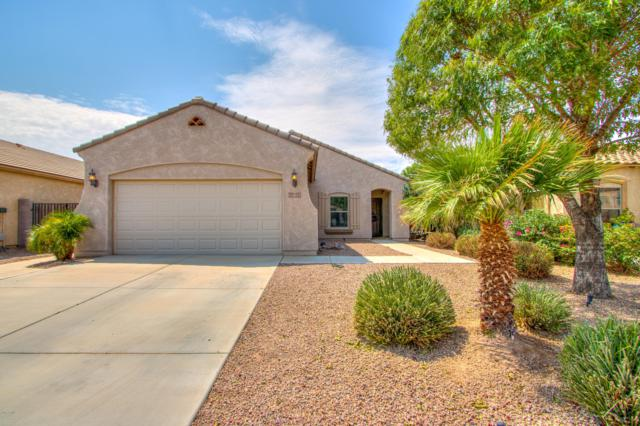 42939 W Kendra Way, Maricopa, AZ 85138 (MLS #5911660) :: Occasio Realty