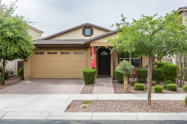 10261 E Sable Avenue, Mesa, AZ 85212 (MLS #5911905) :: Yost Realty Group at RE/MAX Casa Grande