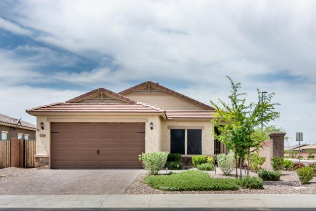 7318 S Quinn Avenue, Gilbert, AZ 85298 (MLS #5912989) :: Power Realty Group Model Home Center