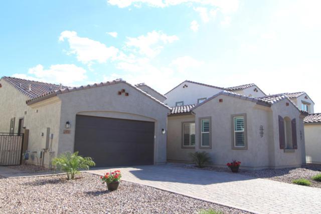 871 E Tonto Place, Chandler, AZ 85249 (MLS #5913006) :: Power Realty Group Model Home Center