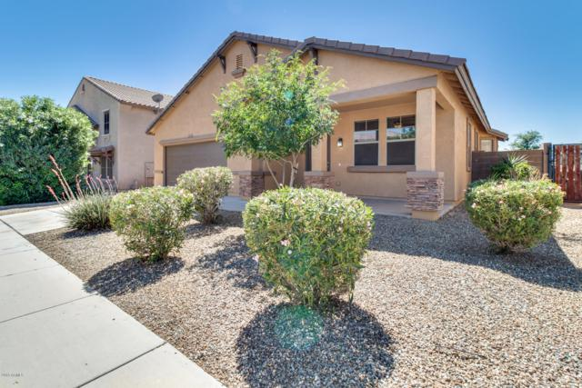 11992 N 158TH Lane, Surprise, AZ 85379 (MLS #5914213) :: Occasio Realty
