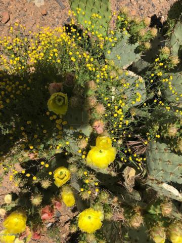 40039 N 71st Street, Cave Creek, AZ 85331 (MLS #5915545) :: Occasio Realty
