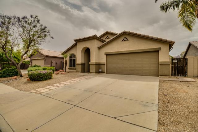 16126 N 159TH Drive, Surprise, AZ 85374 (MLS #5915981) :: Occasio Realty