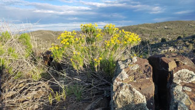 165 E Rainbow Bend, Kirkland, AZ 86332 (MLS #5917420) :: Riddle Realty Group - Keller Williams Arizona Realty