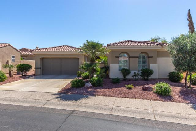 23223 N Gaviota Drive, Sun City West, AZ 85375 (MLS #5918027) :: Arizona 1 Real Estate Team