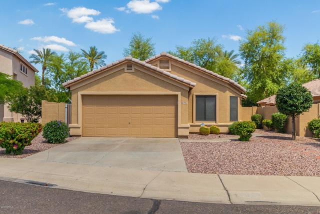 7923 N 53RD Drive, Glendale, AZ 85301 (MLS #5919199) :: CC & Co. Real Estate Team