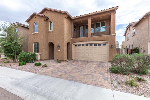 247 E Canyon Way, Chandler, AZ 85249 (MLS #5920472) :: Relevate   Phoenix