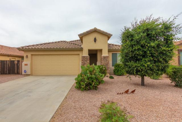 35530 N Belgian Blue Court, San Tan Valley, AZ 85143 (MLS #5920567) :: Riddle Realty