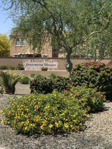 8817 W Aster Drive, Peoria, AZ 85381 (MLS #5920700) :: Santizo Realty Group