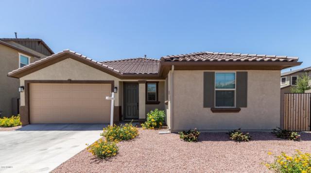 158 E Bluejay Drive, Chandler, AZ 85286 (MLS #5921190) :: CC & Co. Real Estate Team