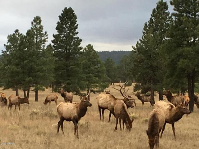 3527 Cione Ranch Road, Flagstaff, AZ 86001 (MLS #5922268) :: Riddle Realty Group - Keller Williams Arizona Realty