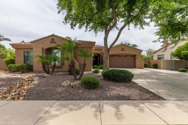523 E Kaibab Place, Chandler, AZ 85249 (MLS #5922380) :: Riddle Realty