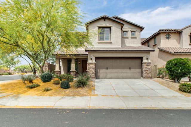 3784 E Matthew Drive, Phoenix, AZ 85050 (MLS #5924164) :: Conway Real Estate