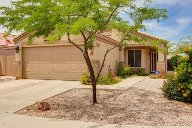 20420 N 31ST Place, Phoenix, AZ 85050 (MLS #5925604) :: Devor Real Estate Associates