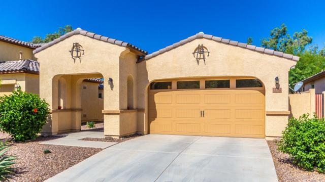 13182 N 93RD Avenue, Peoria, AZ 85381 (MLS #5926284) :: CC & Co. Real Estate Team